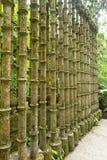 Συγκεκριμένη δομή στους κήπους Xilitla Μεξικό του Edward James στοκ εικόνα