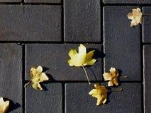 Συγκεκριμένη σύσταση επίστρωσης στο γκρίζο σκυρόδεμα με τα κίτρινα φύλλα στοκ φωτογραφίες