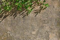 Συγκεκριμένος παλαιός τοίχος με τον κλάδο του δέντρου Στοκ εικόνα με δικαίωμα ελεύθερης χρήσης