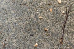 Συγκεκριμένο υγρό υπόβαθρο με τα κομμάτια του ψωμιού μετά από τη βροχή στοκ εικόνες