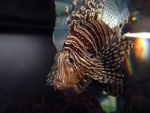 συγκεντρώστε τα ψάρια Στοκ Φωτογραφίες