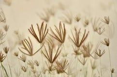 Συγκεχυμένα λουλούδια χλόης Στοκ Εικόνες