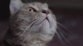 Συγκινήσεις κυνηγιού της γάτας που είδε τα πουλιά απόθεμα βίντεο