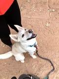 Συγκινημένο σκυλί που ανατρέχει σε ένα πεζοπορώ στοκ εικόνες με δικαίωμα ελεύθερης χρήσης