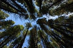 συγκλίνοντα δέντρα Στοκ φωτογραφίες με δικαίωμα ελεύθερης χρήσης