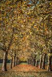 Συγκλίνουσα αφηρημένη τέχνη δέντρων φθινοπώρου στοκ φωτογραφία