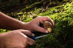 συγκομίζοντας μύκητες Στοκ Φωτογραφία