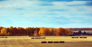 Συγκομίζοντας σανός Στοκ φωτογραφία με δικαίωμα ελεύθερης χρήσης