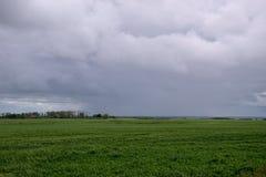 Συγκομιδές σίτου κάτω από την κάλυψη σύννεφων, Saskatchewan, Καναδάς στοκ φωτογραφία