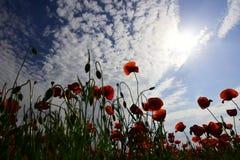 Συγκομιδή, άνοιξη και καλοκαίρι στοκ φωτογραφίες με δικαίωμα ελεύθερης χρήσης