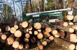 Συγκομιδή δέντρων πεύκων Στοκ Φωτογραφίες