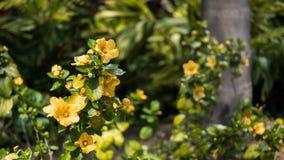 Συγκομιδή εγκαταστάσεων ηλίανθων σε έναν κήπο Στοκ εικόνες με δικαίωμα ελεύθερης χρήσης