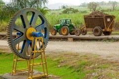 Συγκομιδή ζαχαροκάλαμων στη Κόστα Ρίκα στοκ εικόνες
