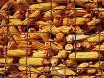 συγκομιδή καλαμποκιού Στοκ φωτογραφία με δικαίωμα ελεύθερης χρήσης