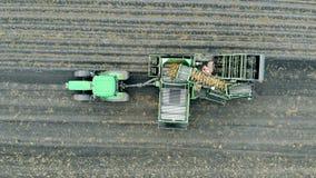 Συγκομιδή, καλλιέργεια, έννοια γεωργίας Ένας μεταφορέας με τις πατάτες λειτουργεί σε ένα πράσινο τρακτέρ απόθεμα βίντεο