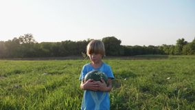 Συγκομιδή καρπουζιών συγκομιδής γιων της Farmer ` s στον τομέα του οργανικού αγροκτήματος απόθεμα βίντεο