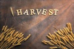 Συγκομιδή-κείμενο από τις ξύλινα επιστολές και τα αυτιά του σίτου και σίκαλη σε ένα σκοτεινό καφετί αγροτικό υπόβαθρο, ακτίνες ήλ στοκ εικόνες με δικαίωμα ελεύθερης χρήσης