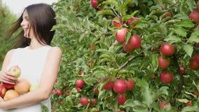 συγκομιδή μήλων Η γυναίκα μαδά ένα μήλο και που βάζει δικοί του σε ένα καλάθι φιλμ μικρού μήκους