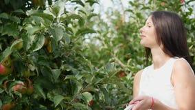 συγκομιδή μήλων Το νέο όμορφο κορίτσι μαδά ένα μήλο και που βάζει δικούς του σε ένα καλάθι απόθεμα βίντεο