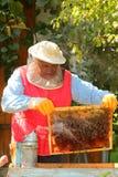 συγκομιδή μελισσοκόμω&nu Στοκ Εικόνες
