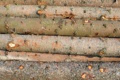 Συγκομιδή ξυλείας Σωρός των κομμένων κούτσουρων έλατου στοκ φωτογραφίες με δικαίωμα ελεύθερης χρήσης