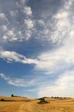 συγκομιδή πεδίων Στοκ φωτογραφία με δικαίωμα ελεύθερης χρήσης