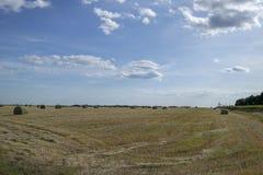 Συγκομιδή του αχύρου στο αγροτικό τοπίο στοκ εικόνες με δικαίωμα ελεύθερης χρήσης