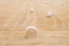 συγκομιδή του σιταριού σίτου το καλοκαίρι γύρω από τα δέματα του αχύρου Στοκ Εικόνες