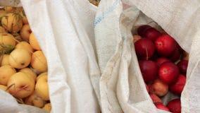 Συγκομιδή των κίτρινων και κόκκινων μήλων απόθεμα βίντεο