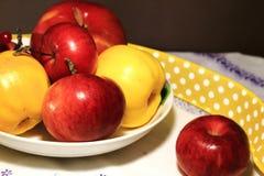 Συγκομιδή των μήλων ζωή φθινοπώρου ακόμα Κόκκινο viburnum, μήλα κίτρινα και κόκκινα των διαφορετικών ποικιλιών σε ένα άσπρο πιάτο Στοκ εικόνες με δικαίωμα ελεύθερης χρήσης