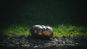 Συγκομιδή φθινοπώρου αποκριών και τρόφιμα διακοπών στοκ φωτογραφία