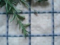 Συγκομιδή φθινοπώρου από τα αρωματικά και ιατρικά χορτάρια Πράσινοι βλαστοί των εγκαταστάσεων: lavender, oregano, δεντρολίβανο, ω Στοκ φωτογραφίες με δικαίωμα ελεύθερης χρήσης