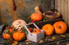 Συγκομιδή φθινοπώρου: πορτοκαλιές κολοκύθες, πιπέρια Σταφύλια σε ένα ψάθινο καλάθι σε ένα παλαιό ξύλινο δωμάτιο αποθήκευσης Στοκ Εικόνες