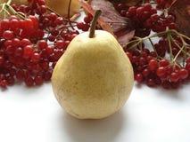 Συγκομιδή φθινοπώρου των φρούτων και των μούρων Αχλάδι ` bera ` στα πλαίσια του viburnum Στοκ φωτογραφίες με δικαίωμα ελεύθερης χρήσης