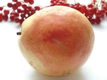 Συγκομιδή φθινοπώρου των φρούτων και των μούρων Αχλάδι ` bera ` στα πλαίσια του viburnum στοκ εικόνες