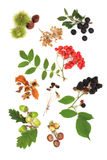 συγκομιδή φθινοπώρου Στοκ Εικόνες