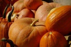 Συγκομισμένες πορτοκαλιές κολοκύθες σε ένα τοπικό αγρόκτημα Στοκ Εικόνες