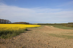Συγκομιδές Canola με το γεωργικό τοπίο Στοκ φωτογραφία με δικαίωμα ελεύθερης χρήσης