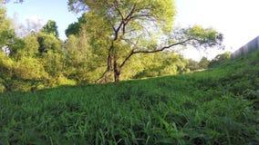 Συγκομιδές nettle στο ηλιοβασίλεμα φιλμ μικρού μήκους