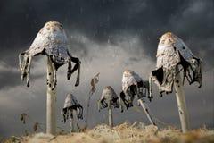 Συγκομιδή για τις μάγισσες Στοκ Φωτογραφίες