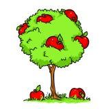 Συγκομιδή η μεγάλη Apple δέντρων της Apple Στοκ Εικόνες
