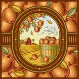 συγκομιδή μήλων Στοκ Φωτογραφία
