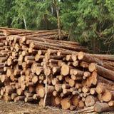 Συγκομιδή ξυλείας για τη βιομηχανία ή την ξύλινη κατοικία Constru ξυλείας Στοκ εικόνα με δικαίωμα ελεύθερης χρήσης