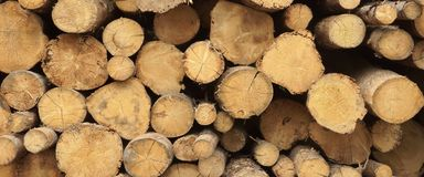 Συγκομιδή ξυλείας για τη βιομηχανία ή την ξύλινη κατοικία Constru ξυλείας Στοκ Φωτογραφία