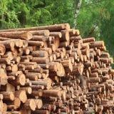 Συγκομιδή ξυλείας για τη βιομηχανία ή την ξύλινη κατοικία Constru ξυλείας Στοκ Εικόνες