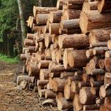 Συγκομιδή ξυλείας για τη βιομηχανία ή την ξύλινη κατοικία Constru ξυλείας Στοκ φωτογραφίες με δικαίωμα ελεύθερης χρήσης