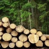 Συγκομιδή ξυλείας για τη βιομηχανία ή την ξύλινη κατοικία Constru ξυλείας Στοκ φωτογραφία με δικαίωμα ελεύθερης χρήσης