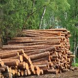 Συγκομιδή ξυλείας για τη βιομηχανία ξυλείας ή ξύλινη κατασκευή κατοικίας Στοκ Εικόνες