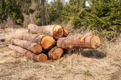 Συγκομιδή ξυλείας στο δασικό σωρό Α των καταρριφθε'ντων δέντρων πεύκων Βιομηχανία ξυλείας Στοκ φωτογραφίες με δικαίωμα ελεύθερης χρήσης