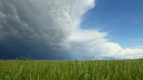 Συγκομιδή σιταριού με το πλησιάζοντας σύννεφο θύελλας φιλμ μικρού μήκους